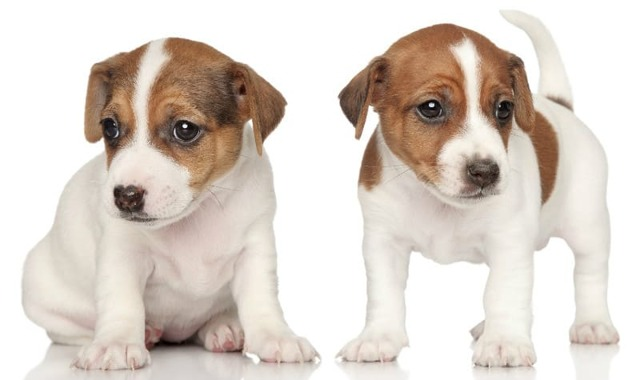 Самые популярные породы собак, какие из них наиболее распространенные