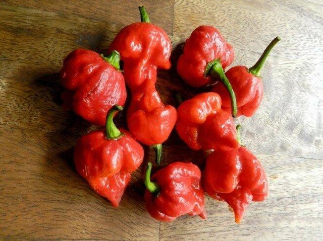 Какой самый острый перец в мире: сорта, которые «жгут»