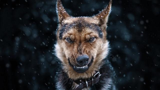 Какая самая злая порода собак в мире