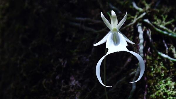 Самый редкий цветок в мире, в какой части земли он растет