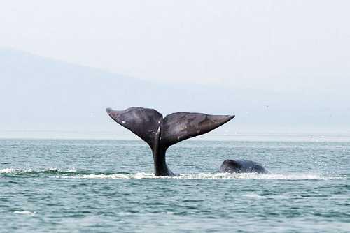 Самое долгоживущее животное в мире, к какому оно виду относится