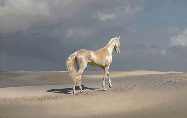 Какая самая красивая лошадь в мире + их фото