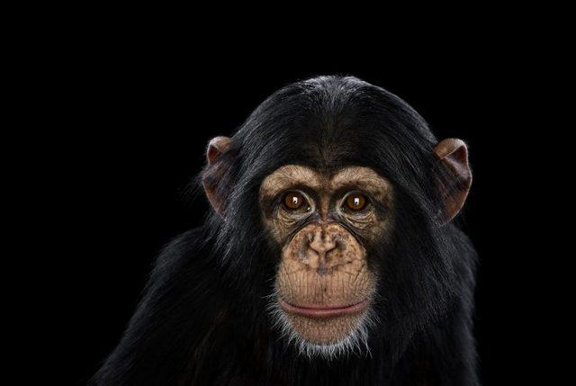 Самое умное животное в мире: обезьяна, дельфин или крыса?