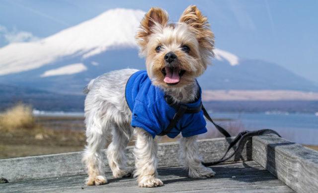 Самые милые и красивые собаки в мире