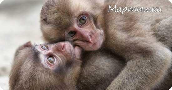 Какой самый многочисленный отряд млекопитающих на земле?
