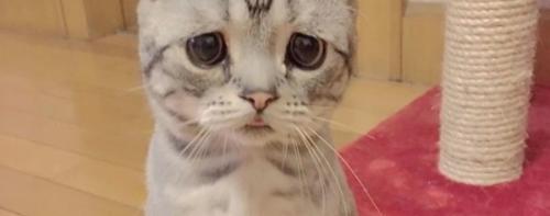Кто самый грустный кот (котенок) в мире
