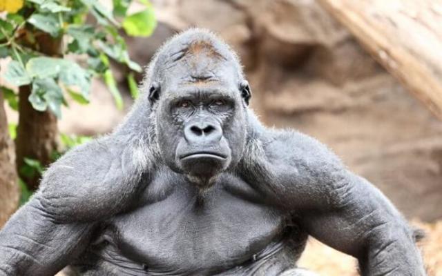Какое самое сильное животное в мире + его фото