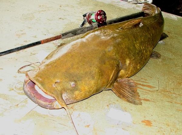 Какая самая страшная рыба в мире?