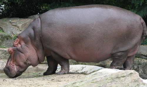 Самые большие и тяжелые млекопитающие на земле
