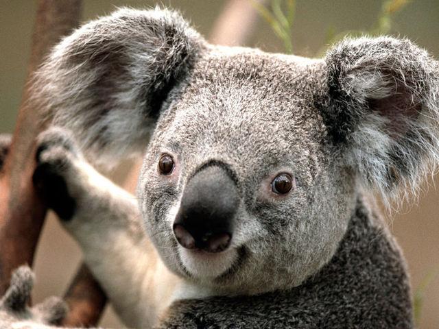 Какие самые милые животные в мире