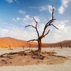 Самое сухое место на земле: где оно находится