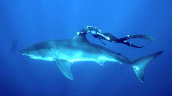 Самые ядовитые существа на планете: наиболее опасные животные в мире