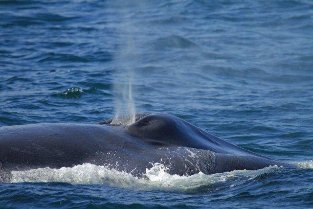 Самые большие в мире животные – синий кит, слон и другие