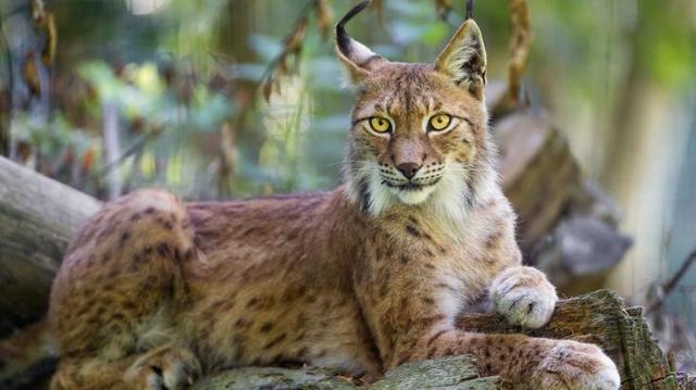 Самое красивое животное в мире: где оно обитает?