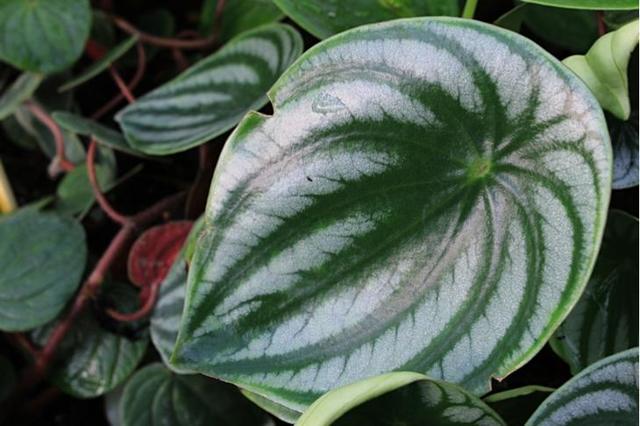 Самые неприхотливые комнатные растения (как цветущие, так и нет) + фото