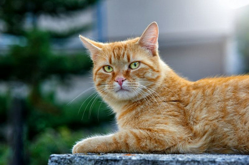 Самый известный кот в мире (знаменитые кошки)