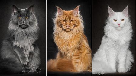 Самые умные кошки в мире: какой они породы?