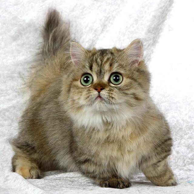 Самые маленькие кошки в мире - породы и их конкретные представители
