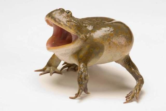 Самые смешные животные в мире: топ забавных зверюшек
